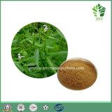 試供品のAndrographis PaniculataのエキスAndrographolide 98%