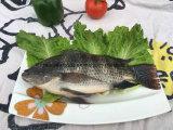 Bevroren Zwarte Tilapia Vissen van China