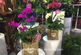 (BC-SF1009) populares hechos a mano paja Natural Cesta de flores