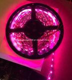 SMD 5050 LED 지구 빛 정원