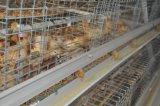 um sistema da gaiola da galinha da franga do frame