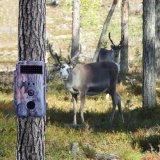 """2.36"""" Pantalla LCD HD 16MP 1080P Video Juego Trail de la Cámara de caza"""