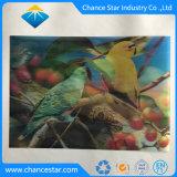 Custom de impresión en color 3D de plástico PET/PP niños Póster