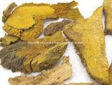Polygonum cuspidatum extrait resvératrol de poudre de 98 %