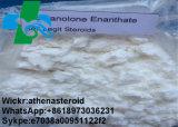 Aumentar el polvo esteroide sin procesar total Drostanolone Enanthate Masteron Enanthate del músculo