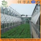 Dach lüftet Ventilations-System für Landwirtschafts-Plastikgewächshaus
