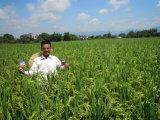 Unigrow Bio органических удобрений на сева риса