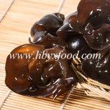 Intera verdura di legno secca del fungo dell'orecchio