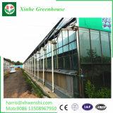 Jardim da casa verde