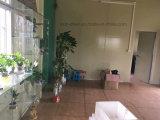Villa Maison préfabriqués mobile avec le Conseil de décoration en PVC