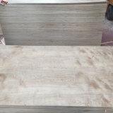 madeira compensada natural do vidoeiro da colagem da melamina de 12*1220*2440mm