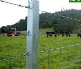 Piket van de Ster van de Stijl Y van Australië Nieuw Zeeland het Post