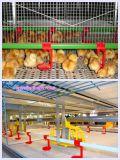 Het Latje en de Steun van het gevogelte in Vee met het PrefabHuis van Lage Kosten