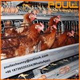 Клетки птицы цыпленка цыплятины горячего высокого качества автоматические для цыпленка бройлера слоя