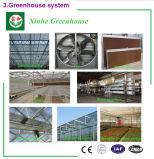 Invernadero de cristal del bajo costo de China con el sistema hidropónico