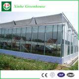 Intelligente Landwirtschafts-Glasgewächshaus für das Pflanzen