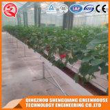 Agriculture Hydroponique Verre végétal Vert Serre