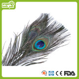 Peacock Feather Cat Rod Cat Toys
