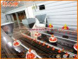 Цыплятина контролирует оборудование сарая с конструкцией панельного дома для универсального
