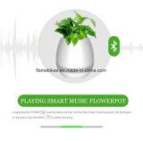 Musik-Blumen-Potenziometer mit LED-Lampe und Bluetooth Funktion