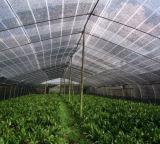 Effet de serre en PEHD vierge 100 % pare soleil agricole net