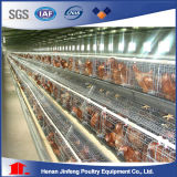 Cages d'oiseau automatiques de poulet de volaille de qualité chaude neuve professionnelle de modèle pour le poulet à rôtir de couche