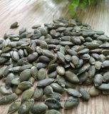 Росли без стерженей семени тыквы раковины