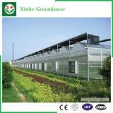 De Serre van het Blad van het Polycarbonaat van de landbouw voor Groenten