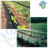 [Tessuto del Nonwoven di agricoltura della pianta/raccolto/messa a terra/serra del coperchio della fabbrica non tessuta]