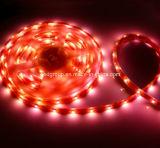 SMD3528 indicatore luminoso della banda di colore rosso 60LEDs/M LED