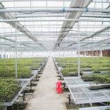 Seedbed mobile dell'inondazione del cassetto dell'acqua della serra di agricoltura per il semenzale