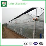 Grande serre chaude en verre économique pour l'agriculture avec le système de ventilation
