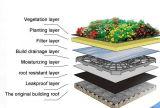 Plantando os telhados TPO Waterproof a membrana