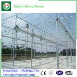 Venlo UV 취급된 유리제 개골창에 의하여 연결되는 열대 온실