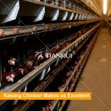 Слой ярусов рамки 6 h конструкции Tianrui автоматический поднимая клетку цыпленка