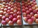 Свежий FUJI Apple с хорошими ценой и качеством