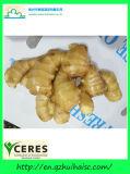 Имбирь Unspoiled толстенького чистого желтого цвета хорошего качества китайский свежий