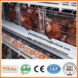Самая лучшая конструкция и прочное автоматическое тип клетка цыпленка слоя батареи