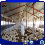 Nuovi materiali da costruzione chiari Pre-Costruiti venduti popolari per l'azienda agricola di pollo