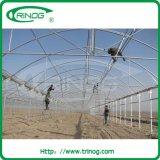 Örtlich festgelegtes Vent Flower Greenhouse für Kenia