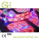 Volledig Spectrum 5050 de LEIDENE van de Groei van de Installatie Verlichting van de Strook met Rode Blauwe Kleur