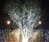 直接クリスマスの照明の工場からの屋外の屋内装飾のためのLEDストリングライト黒ワイヤー