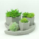 De Materiële Mini Succulente Potten van het cement voor Verkoop