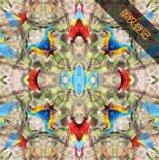Paisley-Art-Dame Silk Scarf