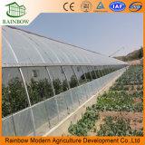 Zonne Serre voor Landbouw of Gevogelte met Redelijke Prijs