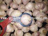 Jinxiang領域からの新しい収穫の新しいニンニク