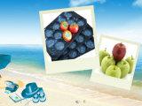 Bandejas plásticas disponibles de la mejor venta de la venta al por mayor del mercado de Europa para el empaquetado fresco de la fruta y verdura