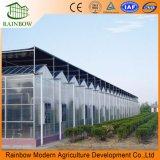 큰 크기 다중 경간 농업 온실 유형 Venlo 폴리탄산염 녹색 집