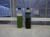 自動排出藻のための二相ディスク遠心分離機の分離器
