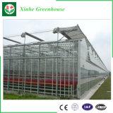Estufas de vidro galvanizadas da construção de aço para vegetais